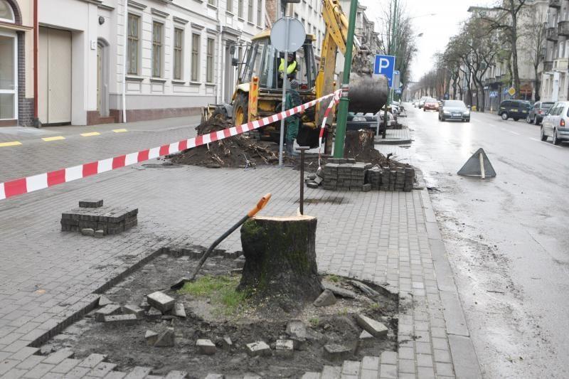 Liepų gatvėje vėl kirs     senus medžius