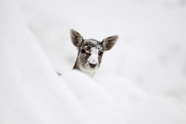 Taisyklės, kaip žiemą šerti miško žvėris
