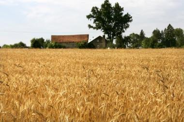 Žemės ūkio produktų supirkimo kainos per metus išaugo 14,6 proc.