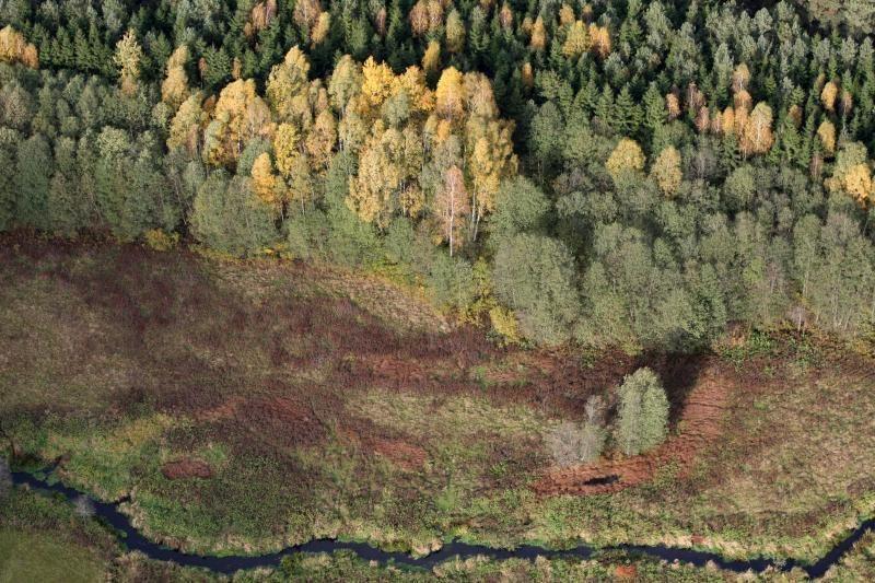 Jau galime ruoštis miškams su prabangiomis rezidencijomis?