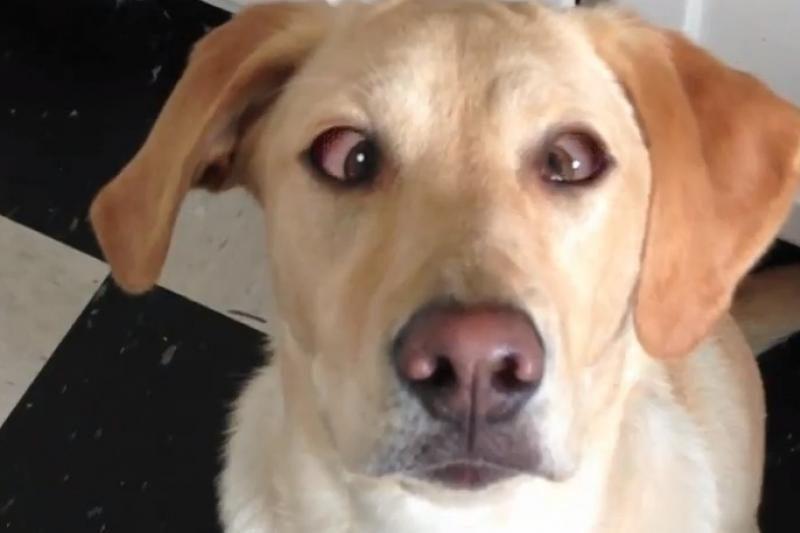Internautų susidomėjimo susilaukė žvairuojantis šuo