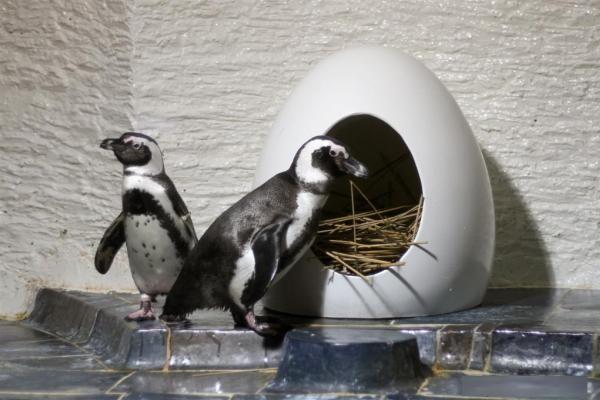 Laiškus Kalėdų seneliui gabens pingvinai