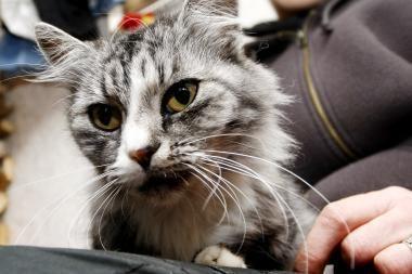 Klaipėdoje – paramos akcija beglobiams gyvūnams