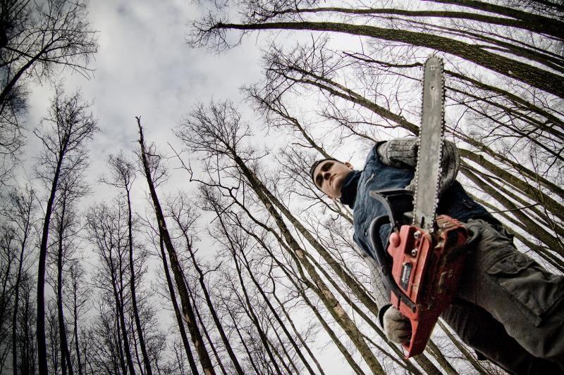 Priekulėje dėl vandenvietės iškirs hektarą miško