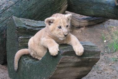 Zoologijos sodui paaukos 21 tūkst. litų