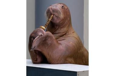 Jūrų vėplys groja saksofonu