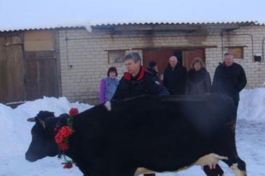 Ūkininkai daugiavaikei gyventojai padovanojo karvę