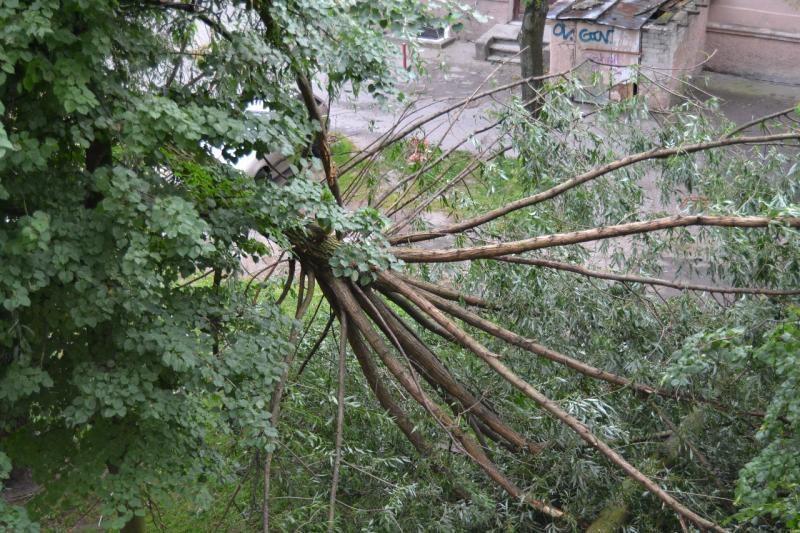 Klaipėdoje audros išverstas medis iškėlė pavojingus sprogmenis