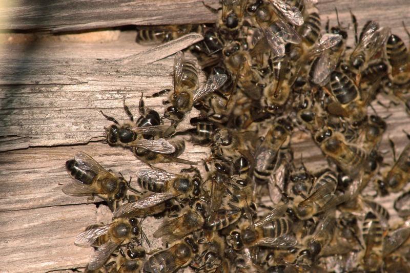 Vagys bitininką paliko   be avilių   ir   medaus