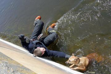 Išgelbėtas Nemune skendęs šuo