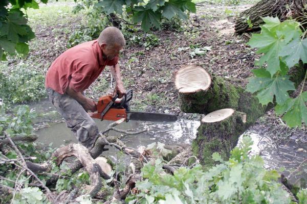 Kokius audros nuverstus medžius ir kur galima tvarkyti?