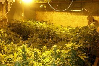 Policija sulaikė 4 kg amfetamino ir aptiko kanapių plantaciją