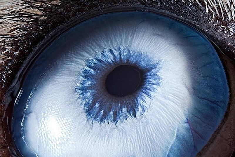 Mokslininkai sukūrė šviesa maitinamą bioninę akį