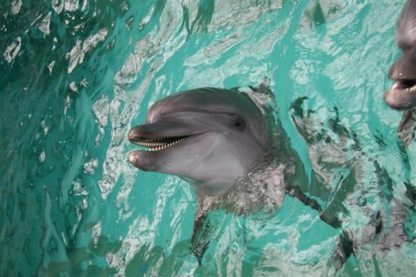 Kauniečiai nenori įsileisti Jūrų muziejaus delfinų