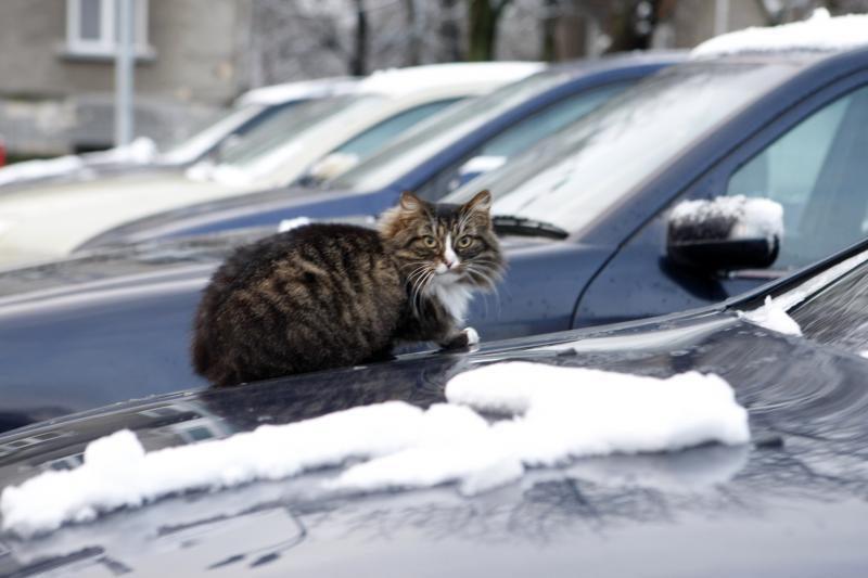 Dėžės katėms daugiabučių kiemuose: reali pagalba beglobiams?