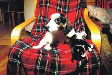 Naujos taisyklės šunims draus loti visą parą (papildyta)