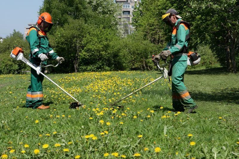 Kad būtų žalesnė, Kinijoje dažoma žolė