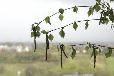 Vilniečiams primenama: kirsti ar sodinti medžius reikia leidimų