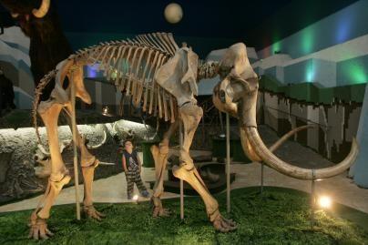 Mokslininkai: mamutai išnyko ne dėl žmonių kaltės
