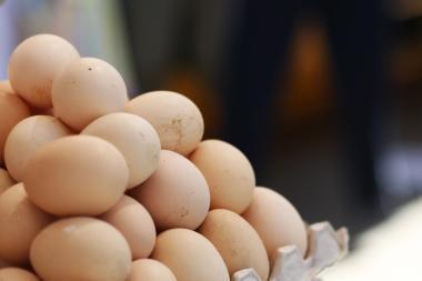 Paukščius atkurti padėtų ir kiaušinio lukštai