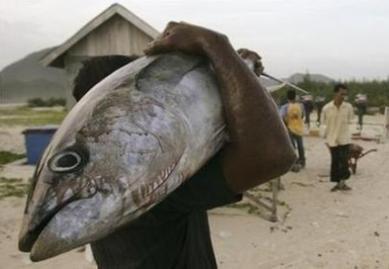 Riebi žuvis stiprina atmintį