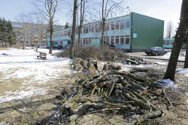 Gyventojai    gaili   nupjautų medžių