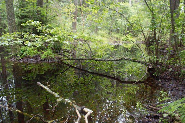 Kinų Pompėja: po pelenais rastas 300 mln. metų miškas