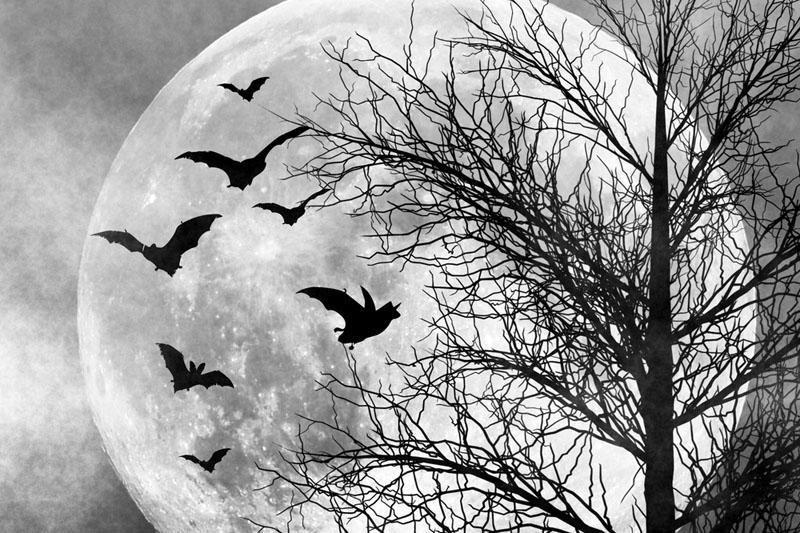 Mėnulis – avarijos, kurios kaltininkas paspruko, rezultatas?
