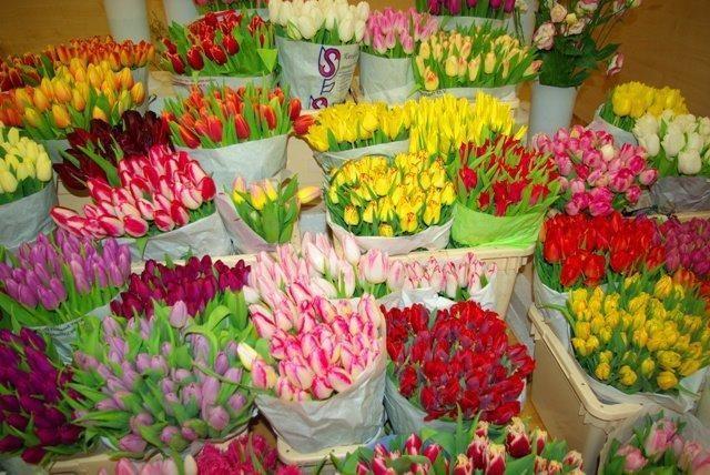 Sekmadienį sostinėje vyksianti paroda pristatys per šimtą tulpių rūšių