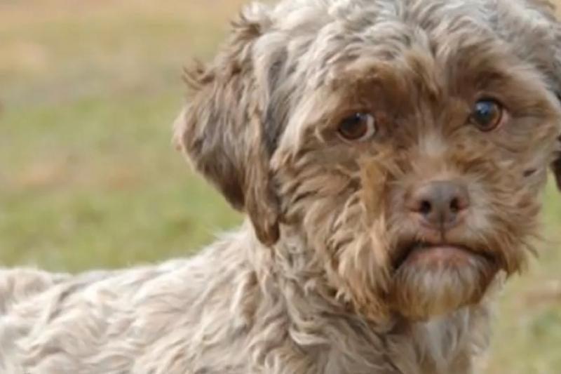 Interneto sensacija – šuo žmogaus veidu – ieško namų
