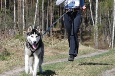 Jadagoniuose rengiamos šunų kinkinių varžybos