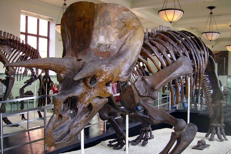 Skelbia radę didžiulius dinozauro kiaušinius