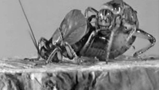 Kanibalizmas sekso metu: jei dama išalkusi, valgyti galima ir partnerį