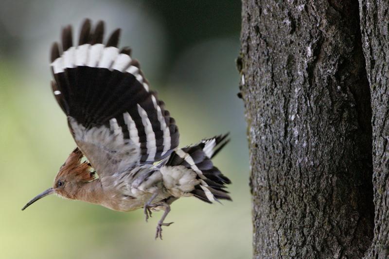 Prekybos centras ornitologams padės gelbėti nykstančius paukščius