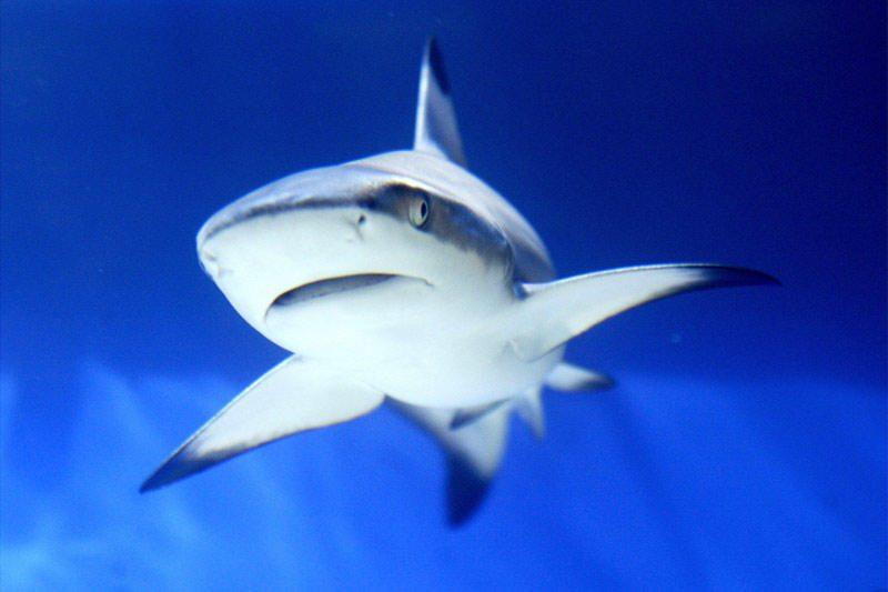 Jėgos aitvarų aistruolis Raudonojoje jūroje peiliu įveikė ryklius