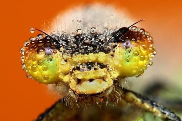 Besidomintiems vabzdžiais – Jaunųjų entomologų mokykla