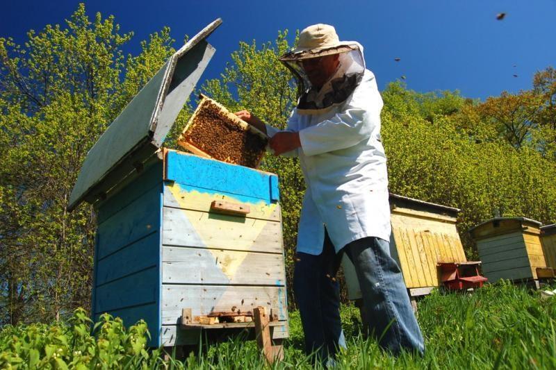 Prancūzijoje bitės ėmė nešti žalią ir mėlyną medų