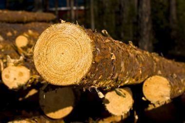 Medienos perdirbėjai priversti pirkti brangesnę medieną iš užsienio, tačiau kelti kainų negali