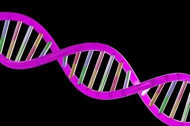 Vilniaus universiteto padalinyje - renginys DNR dienai paminėti
