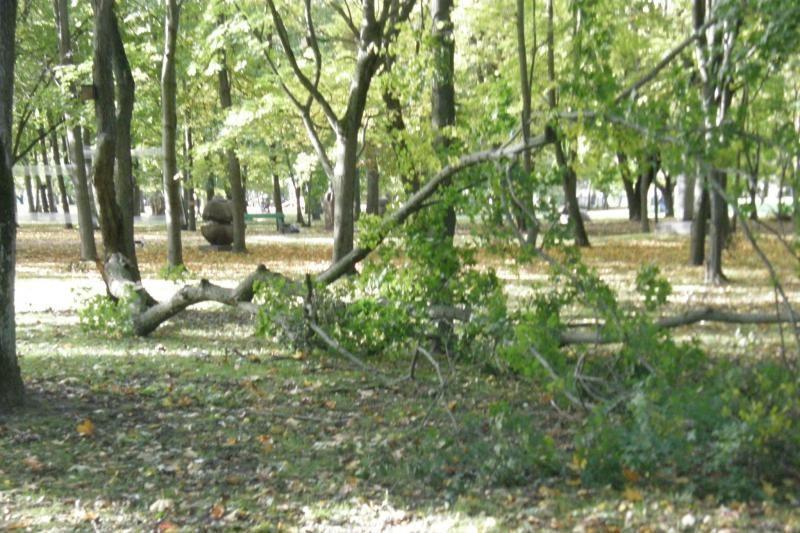 Apdraskytų Skulptūrų parko medžių šakos vis dar parke