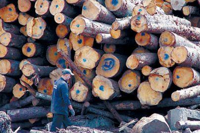 Kuršių nerijos parkas medieną priverstas parduoti pigiau