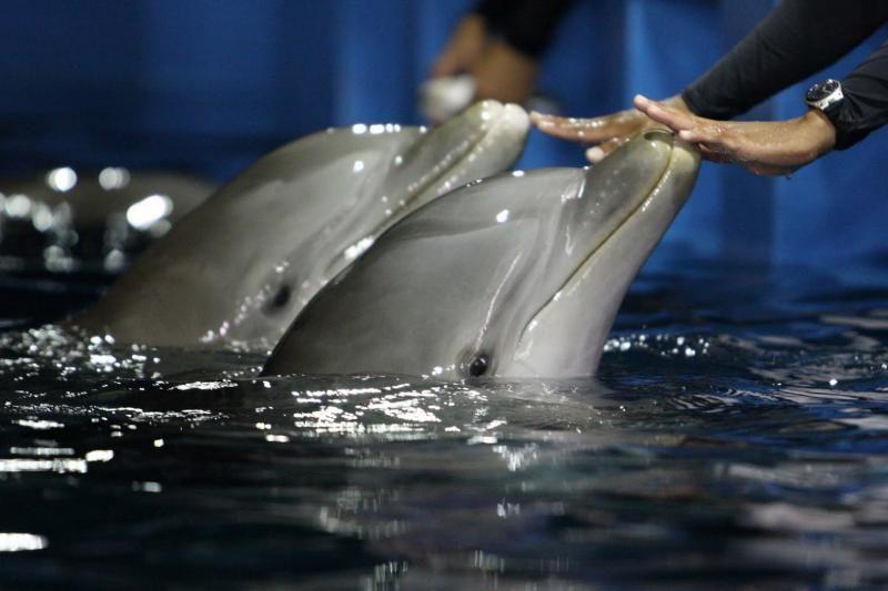 Dėl Jūrų muziejaus delfinų - į prokuratūrą