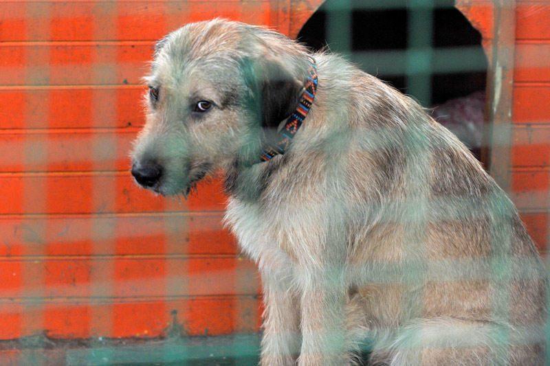 Gyvūnų globėjai: benamiai Vilniuje valgo šunis