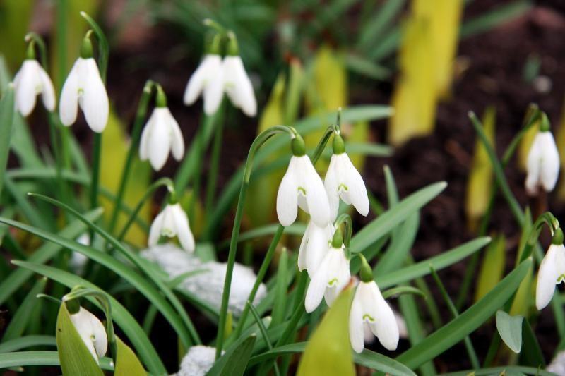 Prognozė: kalendorinio pavasario pradžioje vyraus žvarbūs orai