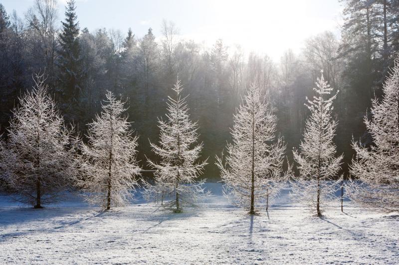 Ilgai laukta žiema atneš pūgas ir šaltį