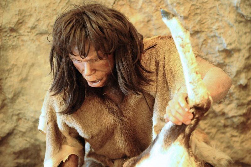 Žmogaus protėvis evoliucijos pusiaukelėje: šimpanzės ir Homo sapiens