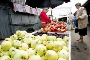 Obuolių užderėjo daug, kriaušių derlius labai mažas
