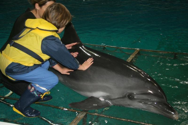 Klaipėdos universitete atidaroma paroda apie delfinų terapiją