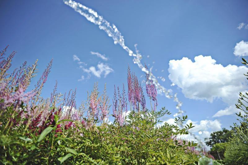 Į botanikos sodą – pabraidyti po spalvingą astilbių jūrą