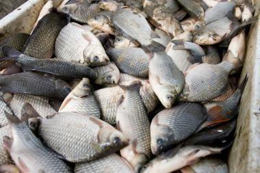 Klaipėdos prašoma skirti vietas prekybai žuvimi